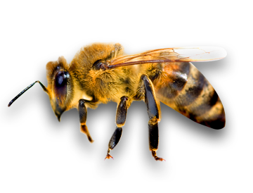 bee png6